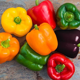Sweet Bell Hybrid Sweet Pepper Mix  - Packet of 35 Seeds