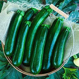 Jackpot Hybrid Zucchini Summer Squash
