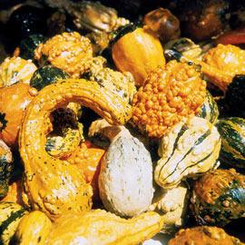 Gourd Large & Small Mix Pkt