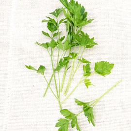 Italian Parsley Herbs