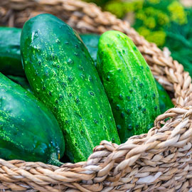 County Fair Improved Hybrid Pickling Cucumber