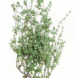 Zaatar Oregano Herbs