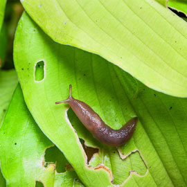 Escar-Go!® Slug & Snail Repellent