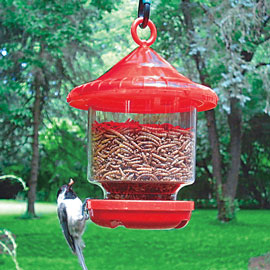 Bird Grub<sup>®</sup> Feeder