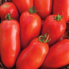 Roma Tomato - Organic Roma Tomato pkt - Approx. 25 seeds per packet