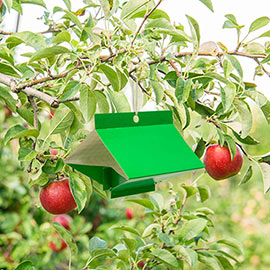 Apple Pest Trap