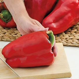 Colossal Hybrid Sweet Pepper