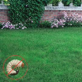 grubHALT!® Bt for Lawn Pests