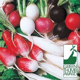 Square Foot Gardening Seed Mat – Organic Radish Mix