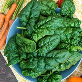 Vital Green II Hybrid Spinach