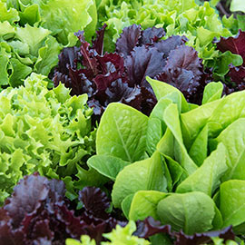 Flash Baby Leaf Lettuce Mix
