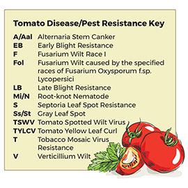 Easy Slice<sup>™</sup>  Hybrid Tomato