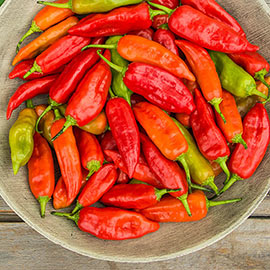 Aji Rico Hybrid Hot Pepper