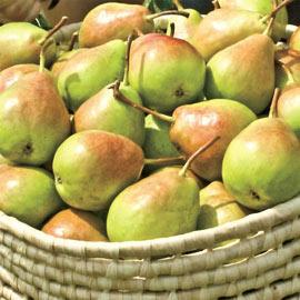 Pear Crisp 'N Sweet™ PP14034