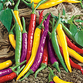 Carnivale Cayenne Hot Pepper Blend
