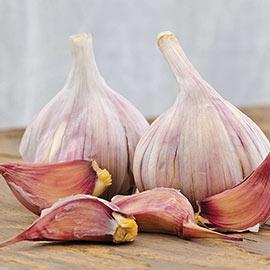 Duganski Hardneck Garlic