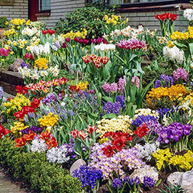 Spring Bulb Garden Collection