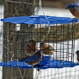 Bluebird Barrier Feeder