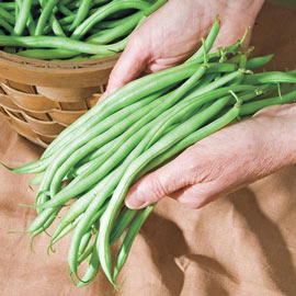 Bush Bean Pickin' & Grinnin' Pkt