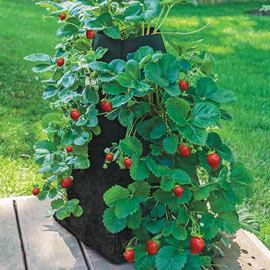Grow Tub® Strawberry Tower™