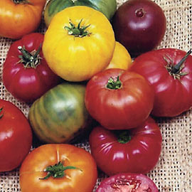 Rainbow Blend Heirloom Tomato
