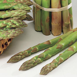Asparagus Jersey Giant Hybrid Medium