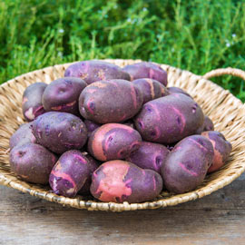 Purple Viking Potato