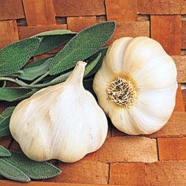 Garlic Transylvanian Softneck