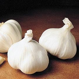 Great Lakes Hardneck Garlic