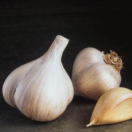 Garlic German Red Hardneck