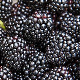 Black Magic™ Blackberry