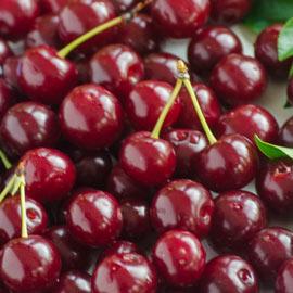 Romeo<sup>™</sup> Dwarf Cherry
