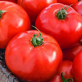 Iron Lady Hybrid Tomato