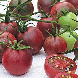 Tomato Chocolate Cherry PKT