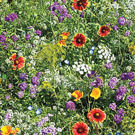 Gurney's Beneficial Bug Wildflower Mix