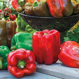 Gurney's Giant II Hybrid Sweet Pepper