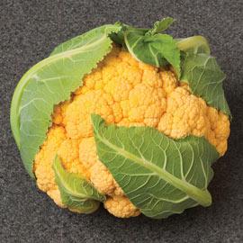 Flame Star Hybrid Cauliflower