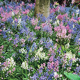 Wood Hyacinth Mix