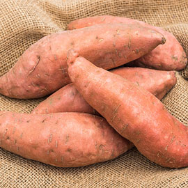 Covington Sweet Potato