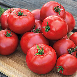 Gurney Girl's Best Hybrid Tomato