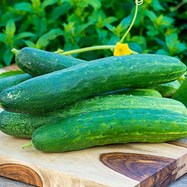Garden Sweet Burpless Hybrid Slicing Cucumber