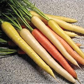 Carrot Rainbow Hybrid Pkt