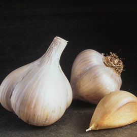 Garlic Softneck Walla Walla Early