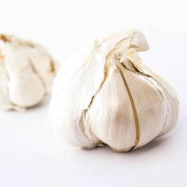 Elephant Hardneck Garlic - Elephant Hardneck Garlic