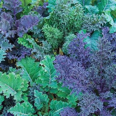 Gurney's<sup>®</sup> Winter Wonderland Kale Mix