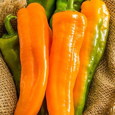 Sweet Pepper Orange Kiss Hybrid