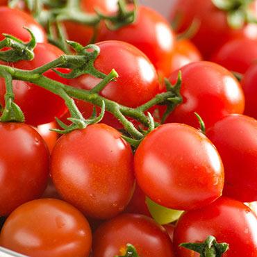 San Vicente Hybrid Tomato