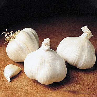 California White Garlic