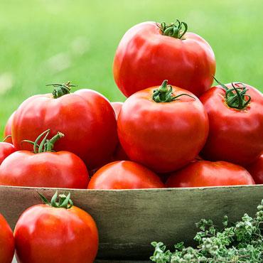 Tribute Hybrid Tomato