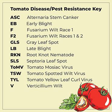 Early Girl Hybrid Tomato